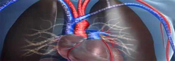 Les 7 conseils pour bien vivre son hypertension